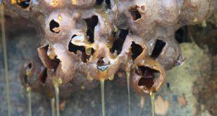 sancti spiritus, rubros exportables, miel de abeja, exportaciones