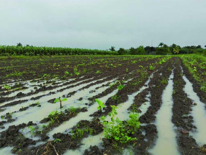 sancti spiritus, agricultura, tormenta tropical eta, intensas lluvias en sancti spiritus, lluvias en sancti spiritus, desastres naturales, produccion de alimentos