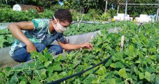 sancti spiritus, agricultura urbana, organoponicos, desarrollo sostenible