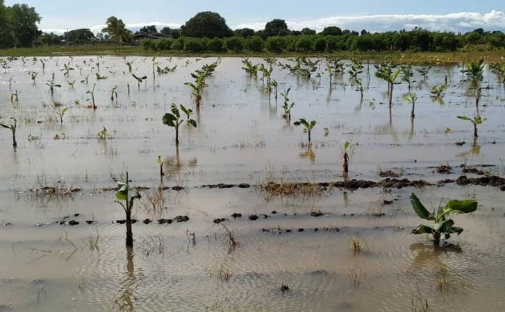 sancti spiritus, tormenta tropical eta, desastres naturales, agricultura, consejo de defensa, lluvias en sancti spiritus, cultivos varios, cafe, frijol
