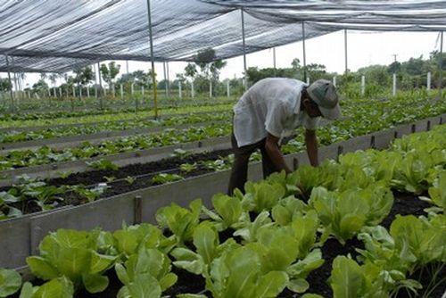 cuba, produccion de alimentos, agricultura, agricultura urbana, minag