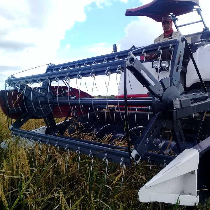 En Las Nuevas se ha cortado el arroz en medio de una atacadera increíble.