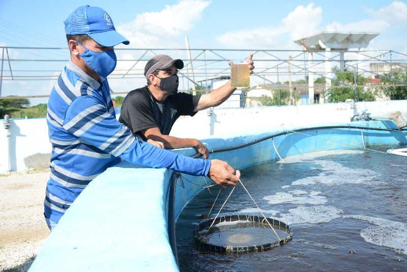 Pescar, producir, asistir a los enfermos o prestar otros servicios y actividades forman parte de la cotidianidad en Tunas de Zaza.