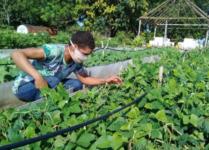 cuba, tarea ordenamiento, economia cubana, empleo, direccion municipal de trabajo