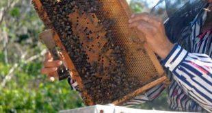 apicultura, miel, miel de abeja, produccion de miel