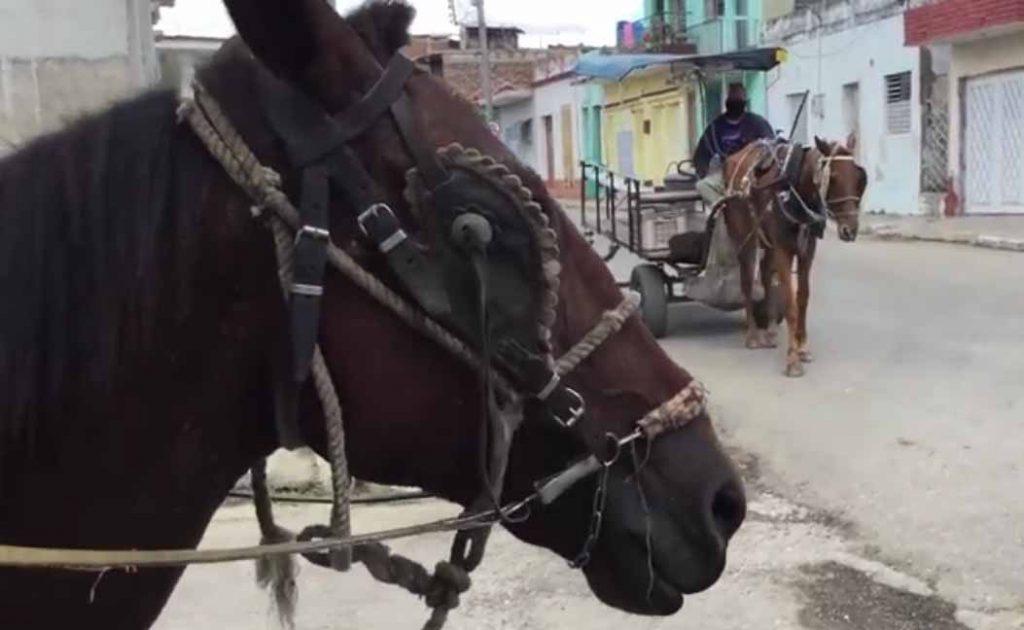 Los maltratos los tenemos ahí a la vista de forma diaria, en los propios coches, asegura Vicente. (Foto: Joan Pérez)