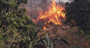 cuba, incendios forestales, guardabosques