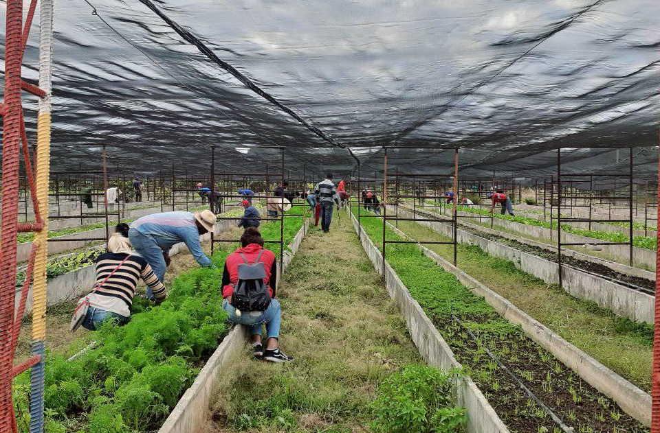Más de 800 estudiantes de la provincia se suman a las tareas sociales y productivas del territorio. (Foto: Abran Sánchez)