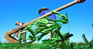 trinidad, economia de sancti spiritus, tarea ordenamiento, produccion de alimentos, autoabastecimiento territorial, covid-19