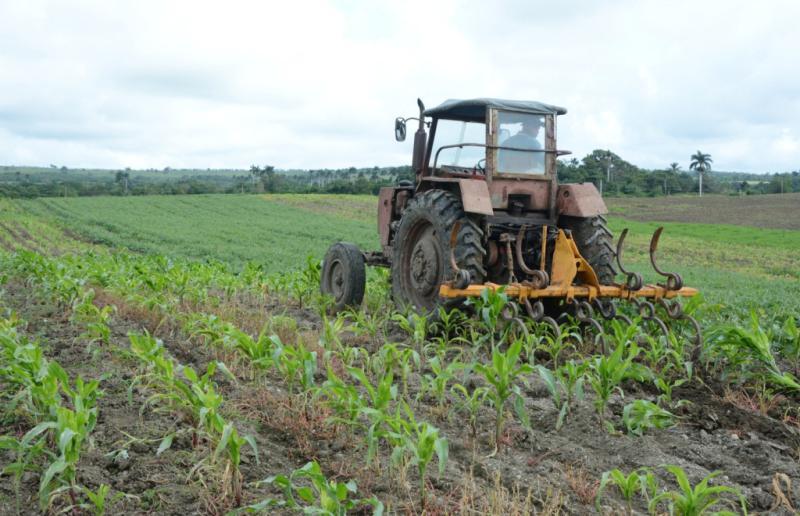 yaguajay, citma, cultivos transgenicos, produccion de alimentos, desarrollo local
