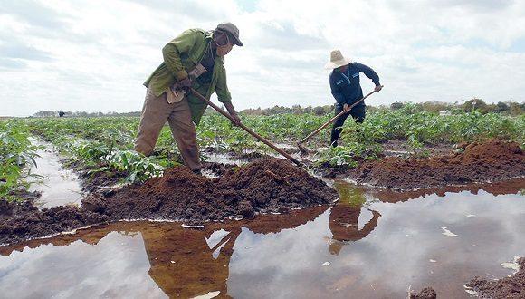 Los agricultores cubanos han ratificado el principio de continuar produciendo alimentos. Foto: Pastor Batista Valdés.