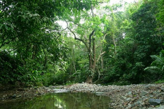 colombia, panama, selvas, migracion, estados unidos