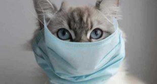 rusia, animales, fauna, vacuna contra la covid-19