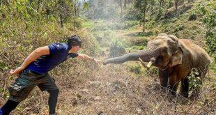 tailandia, animales, elefante, redes sociales, elefante