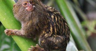 fauna, animales, hallazgo, amazonia