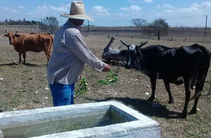 sancti spiritus, agricultura, ganaderia, economia cubana,