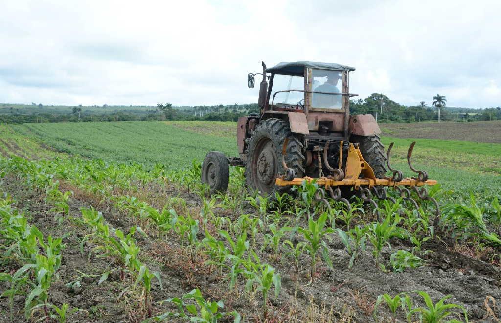 Este año los campesinos reciben beneficios fiscales para incentivar la producción de alimentos. (Foto: Vicente Brito / Escambray)
