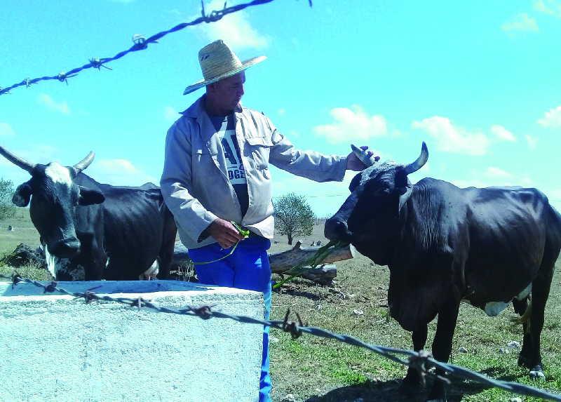 Nuevos horizontes se divisan delante de la campiña a raíz del paquete de 63 medidas aprobadas por el Gobierno cubano.