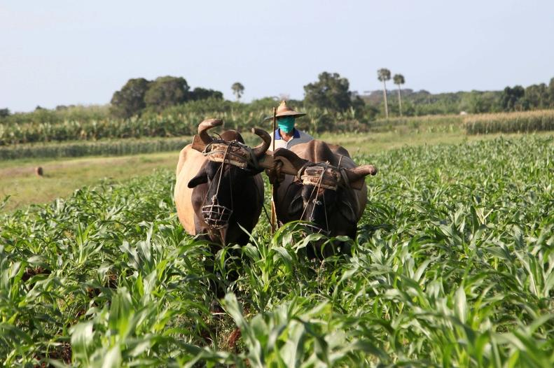 cuba, produccion de alimentos, precios, agricultura, economia cubana, tarea ordenamiento