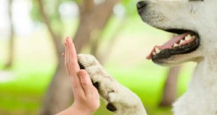 cuba, proteccion animal, animales, agricultura