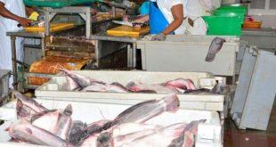 sancti spiritus, indistria alimentaria, pesca, primero de mayo, dia internacional de los trabajadores