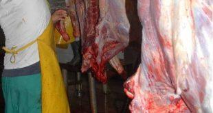 cuba, carne bovina, ganaderia, agricultura, tarea ordenamiento, economia cubana