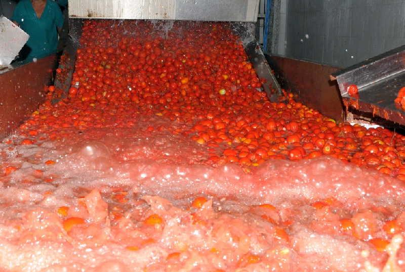 sancti spiritus, economia, tomate, fabrica de conservas, ueb conservas y vegetales