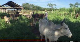 cuba, visiones, periodico escambray, noticiero, carne bovina, ganaderia, economia cubana, beisbol cubano, duo cofradia, cubadisco