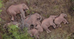 china, elefantes, fauna, animales, medio ambiente, naturaleza