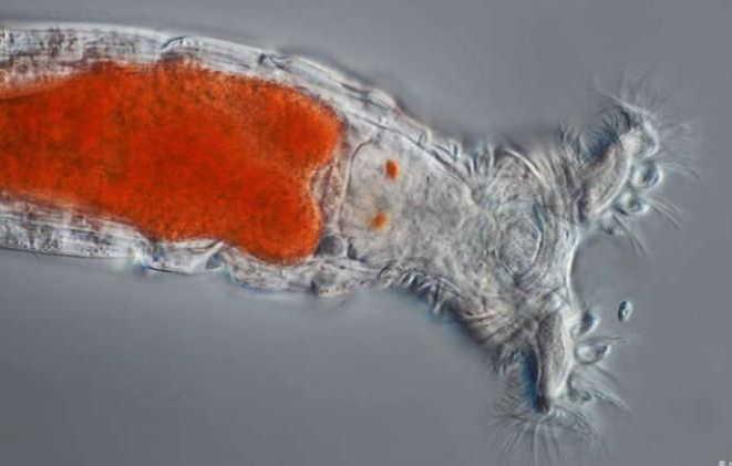 animales, hallazgo, microbiologia, supervivencia por congelacion, siberia