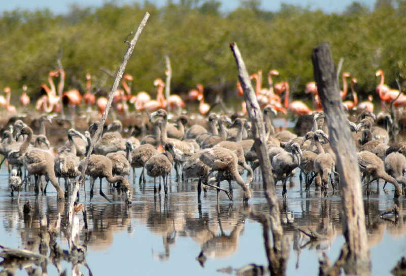 sancti spiritus, medio ambiente, 5 de junio, dia mundial del medio ambiente, parque nacional caguanes, lomas de banao