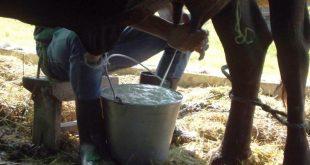 cuba, minag, leche, produccion de leche, empresa lactea, ganaderia, economia cubana