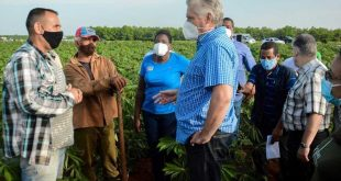 cuba, economia cubana, alimentos, produccion de alimentos, agricultura, miguel diaz-canel, mayabeque