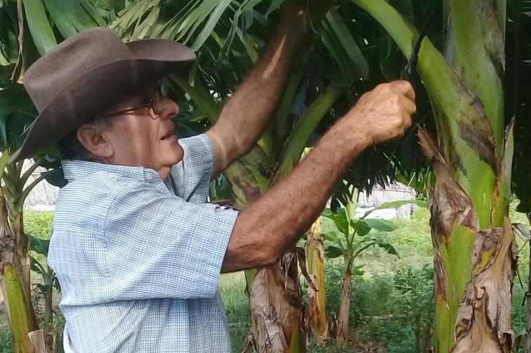 sancti spiritus, agricultura, economia cubana, polo productivos, produccion de alimentos, cultivos varios, cpa, tarea ordenamiento