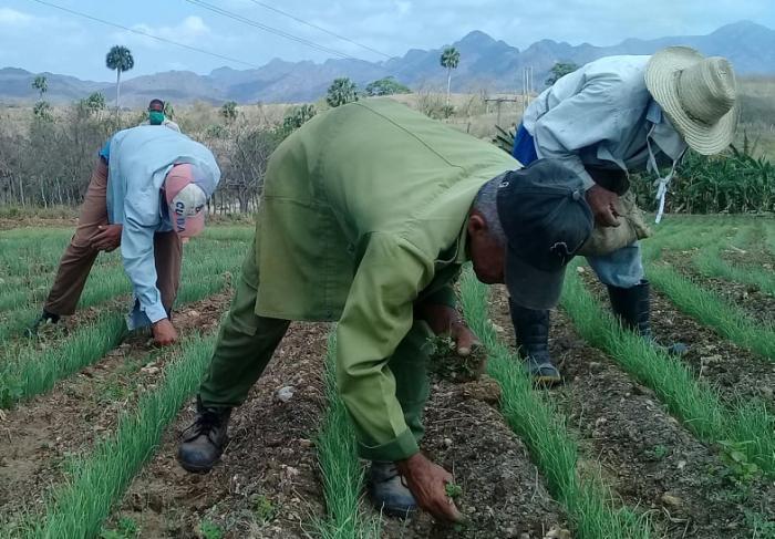 sancti spiritus, agricultura, trabajo por cuenta propia, empleo, salario, ministerio de la agricultura
