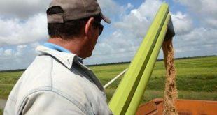 sancti spiritus, agricultura, sur del jibaro, arroz, campesinos