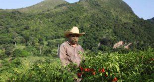 sancti spiritus, exportaciones, ajies, carbon vegetal, frutas selectas, forestales, banao