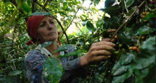 cuba, agricultura, mujer rural, dia de la mujer rural
